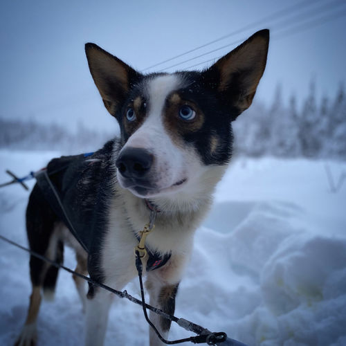 Portrait of dog in snow