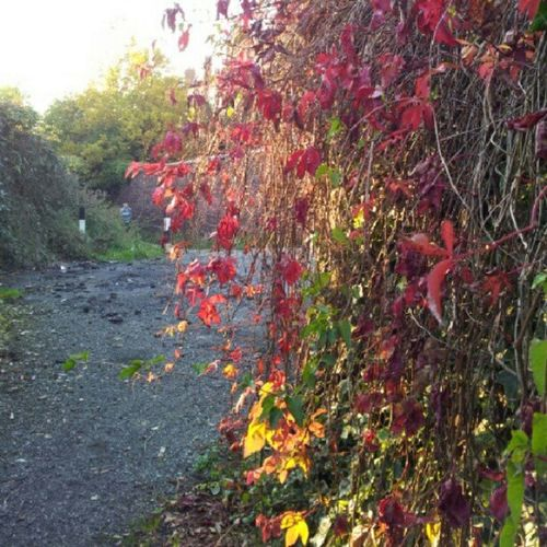 Manchester Gorton Automn leaves are on Fire
