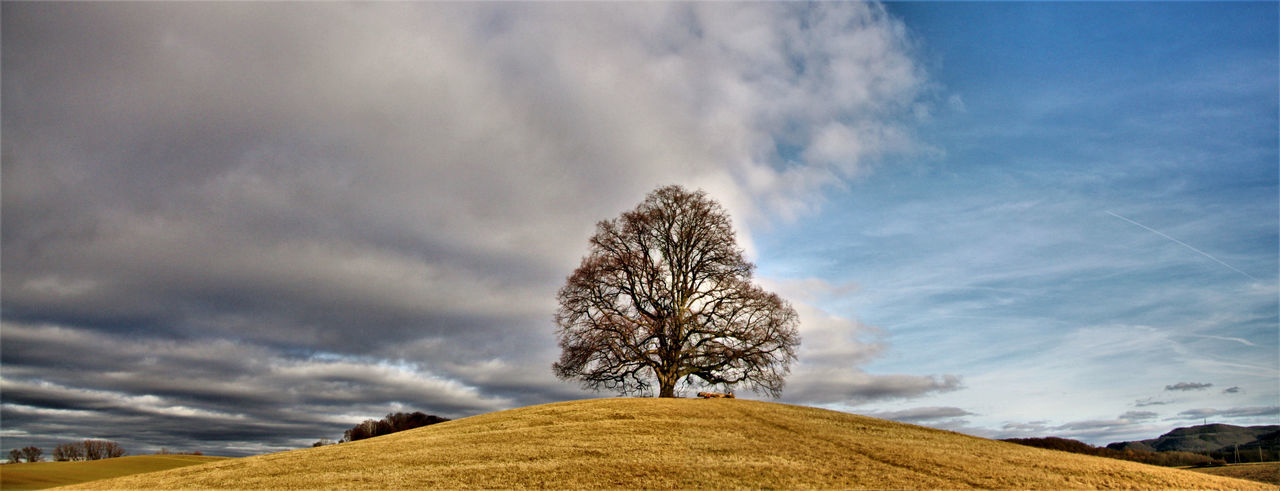 Low angle view of tree on field against sky