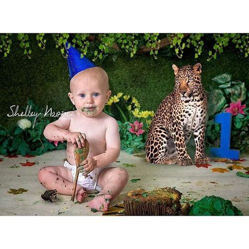 Miles rocked his jungle themed cake smash! Cakesmash Cakesmashportsmouth Portsmouthphotographer Childphotography familyphotographer cakesmashphotography jungle leopard shelleynaomiphotography