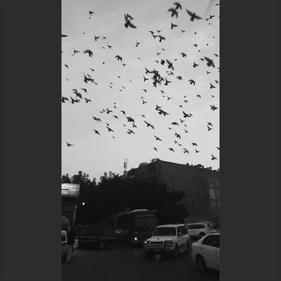 Birds Morning Firstpicoftheday Blacknwhite Photography Q8ig Q8 Kuwait