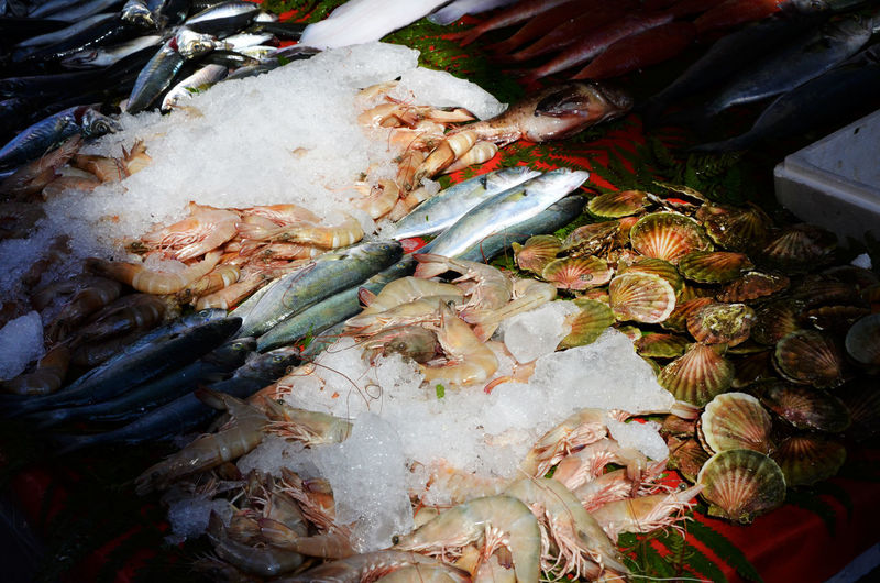 Catch Of Fish Close-up Cooking Time Crab Day Fish Fish Market Flat Oyster Food Food And Drink Food Photography Freshness Healthy Eating High Angle View Istanbul Market No People Outdoors Oyster  Seafood Seafood Travel Photography Turkey