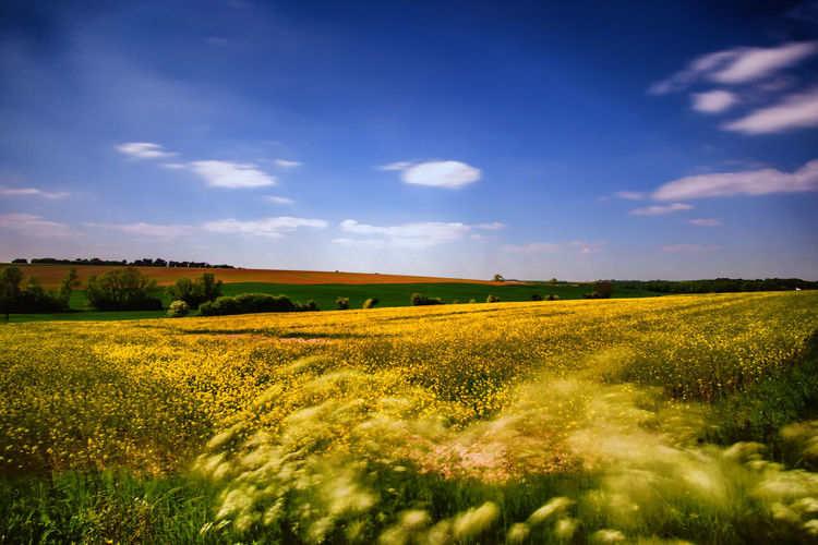 Champ de colza Colza Colza Field Longue Exposition Pose Longue Exposure Long Exposure Flower Rural Scene Agriculture Field Summer Crop  Farm Sky Landscape Cloud - Sky Cultivated Land Agricultural Field Patchwork Landscape