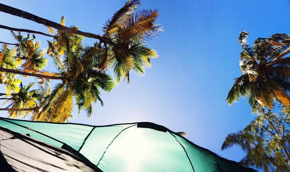 A little bit of sun☀️ Low Angle View Clear Sky Nature Day Blue Sunny Sun Outdoors Palm Leaf Tranquility Beach