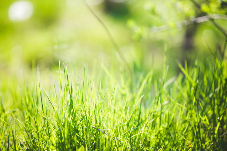 Close-up of grass on field
