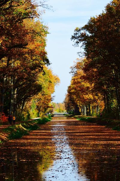 Autumn Beauty In Nature Nature Outdoors Season  The Way Forward Tranquility Walkway Water