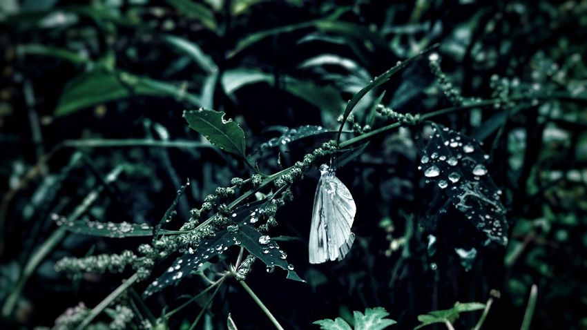 🦋… Close-up Nature One Animal Animal Wildlife Focus On Foreground Beauty In Nature Leaf Animals In The Wild Fragility Landscape_photography Black_chica1709 The Week Of Eyeem EyeEmNewHere Hokkaido,Japan Autumn Butterfly Animal Themes No People Outdoors Japanese Photography Landscape Water