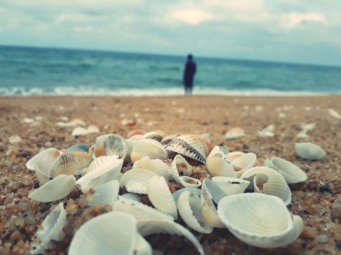 Malaysia Malaysia Truly Asia Beach Sea Seashell No People Outdoors Close-up First Eyeem Photo