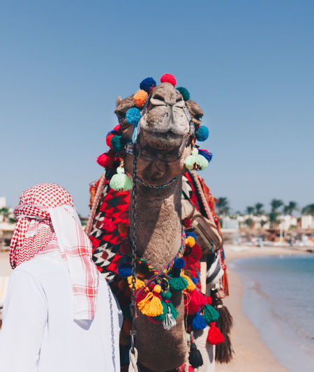 Egyptian with a camel New Animal Themes Beach Camel Colorful Day Daylight Domestic Animals Egipt Egyption Mammal One Animal Outdoors People Pets Real People Summer