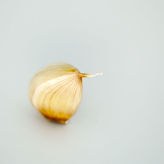 A clove of garlic with a gray background, photographed in the studio. Colored Black Background Close-up Day Food Food And Drink Freshness Garlic Bulb Garlic Clove Gray Background Multi Colored No People Studio Shot White Background