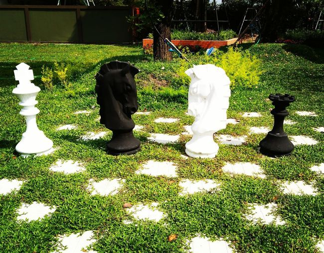 Chess Piece Chess Chess Board Sunlight Grass Green Color Knight - Chess Piece Board Game Dice Strategy Game Business Strategy Little Personality  Young Jigsaw Piece Jigsaw Puzzle Leisure Games Pawn - Chess Piece Queen - Chess Piece Outdoor Play Equipment Park - Man Made Space King - Chess Piece Growing Blooming Lawn