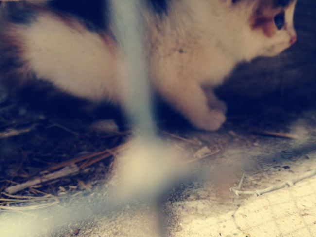 Abstract Close-up Outdoors May Sunny Day Picoftheday 2017 Nature Day No People Feline Animal Themes Domestic Animals Pets Domestic Cat