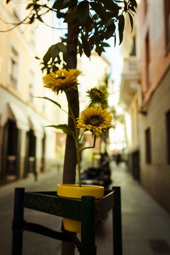 Close-up of flower pot on street against building