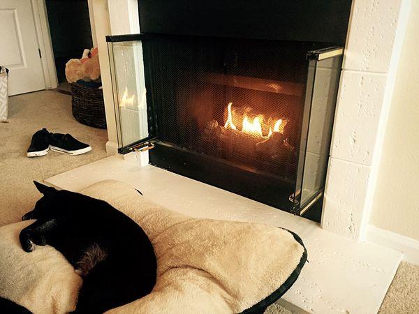 Firedog. Dogs Fireplace
