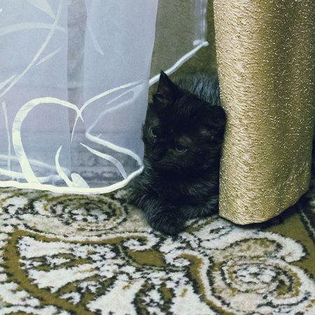 GIOLLETTACat Pets One Cat Cat♡ Beatiful Cat I Love My Cat Cat Photography Domestic Cat Cats 🐱 Domestic Animals Animal Themes Animal One Animal Animal_collection Black Cat Black Cat Photography Black Cat Is Just So Beautiful.