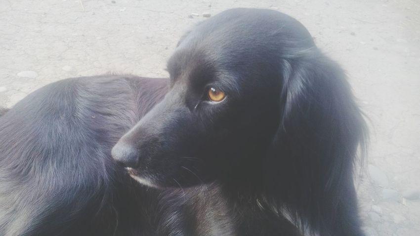 Dog Puppy Pet Love Family Nature Animalworld