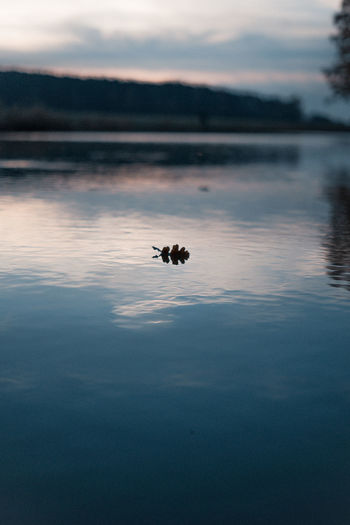 View of a leaf in lake