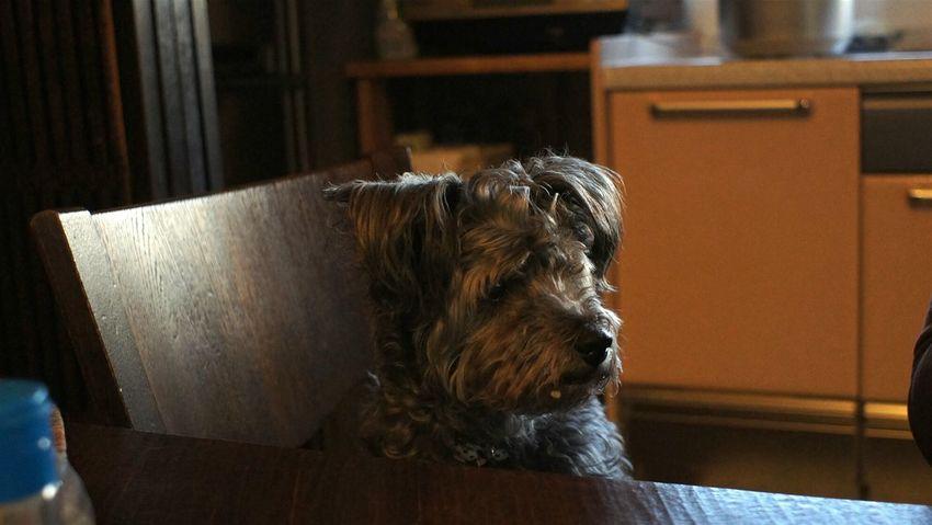 Pets Dog Indoors  Domestic Animals Animal Day Animal Themes Takumar 28mm F3.5 Nex5