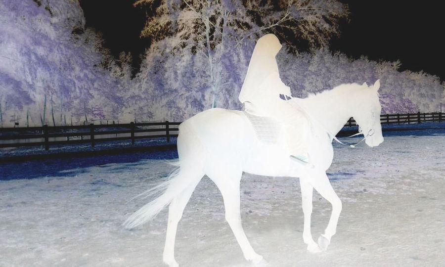 Activity Holiday Horse Photography  Horse Racing Nature Outdoors The Great Outdoors - 2017 EyeEm Awards Xperia Ray