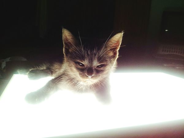 Hanging Out Check This Out Hello World Cheese! Relaxing Cat♡ Cat Lovers Eyemcat Pets Corner Pet Photography  Cute Pets Kitten Cute♡ Cute Baby Cutecats Cutepets Cute Kitty🐱 Welcome To Black