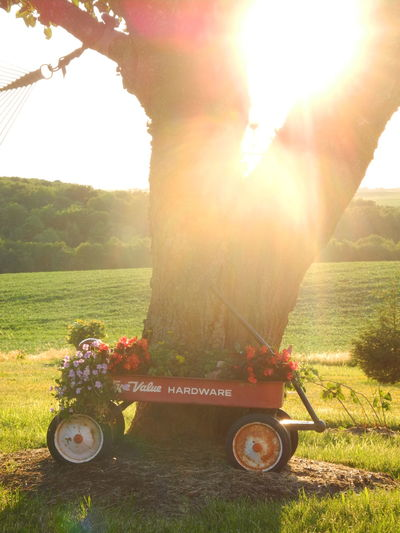 Grass Sunlight Sunbeam Lens Flare Garden Outdoors Wagon  Little Red Wagon Summer Summertime Red Flowers, Nature And Beauty Tranquility Tranquil Scene Sunset Sunrise Sunlight ☀ Growth Countryside Country Living Relax Live For The Story