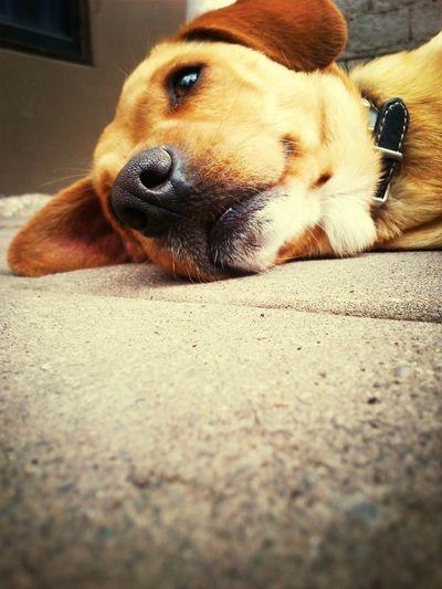 Doglover Dog Bobito Hermoso❤
