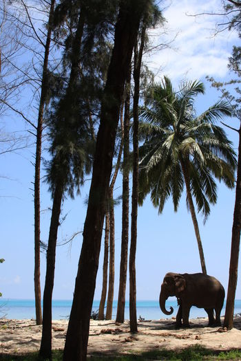 Andaman Beauty In Nature Elephant Elephants Palm Trees Paradise Tranquil Scene Tranquility Tree Showcase July Colour Of Life Been There. Lost In The Landscape