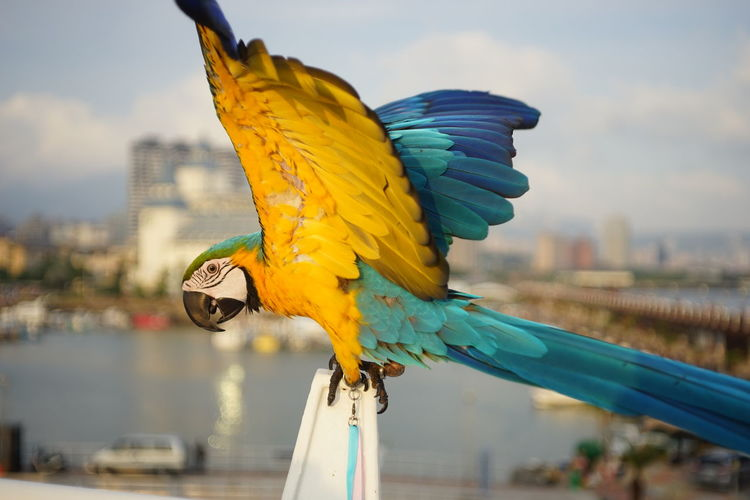 Macaw Perching On Railing Against Sky