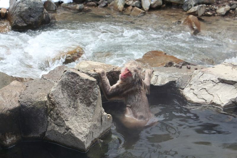 Nature photography UncinditionalLove Geography Young Animal Animal Animal Wildlife Animals In The Wild Day Focus On Foreground Monkey Snow Monkey Onsen No People Outdoors Relaxing Japan Rocks Water Wave