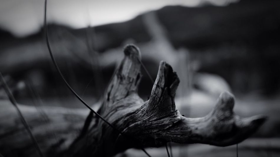 Sweden Lovecanon Wood