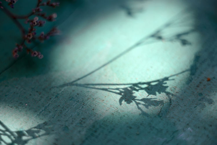 Close-Up Of Shadows
