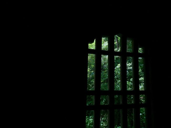 Ultimate Japan Green Nature Japanese Temple Window