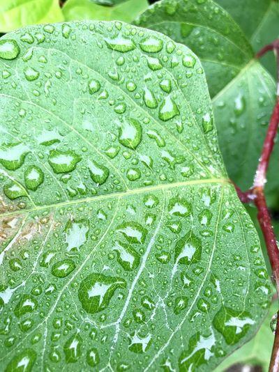 Drop Wet Plant