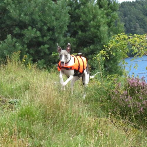 Running I Love My Dog Whippet Check This Out Cheese! Pets Corner Live For The Story