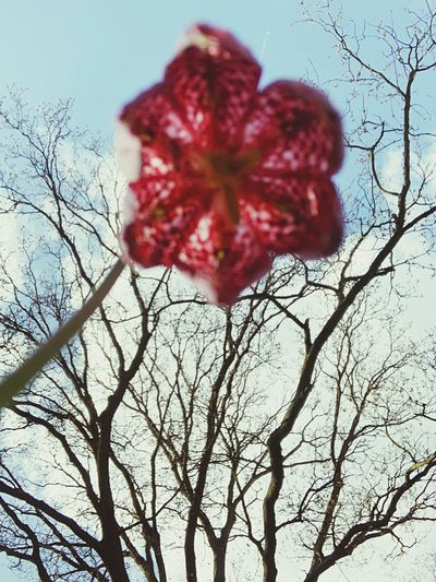 Low angle view of red flower growing against sky