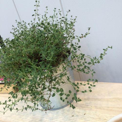 cute plants Chococo Plant Cute Aesthetic Break Greenery Secretlyanenvironmentalist Cafe