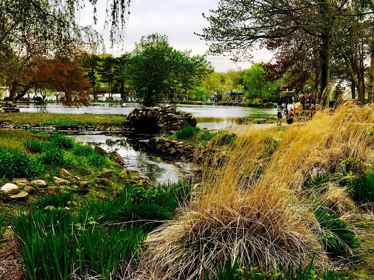 plant, tree, water, growth, beauty in nature, grass, nature, day, scenics - nature, tranquility, lake, tranquil scene, reflection, incidental people, green color, sky, park, land, outdoors