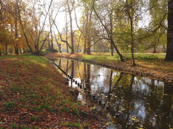 Autumn Autumn Colors Autumn Leaves Colors Of Autumn Fall Beauty Reflection Water Reflections Nature Pankow Showcase: November Landscapes With WhiteWall
