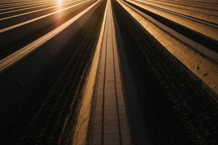 High angle view of asparagus field