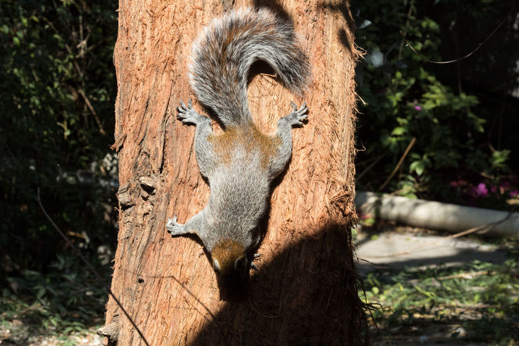 Squirrel Squirrel Photo Animal Wildlife Close-up Day Mammal Nature One Animal Outdoors Sunlight