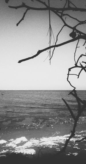 Sea Horizon Over Water Tranquil Scene Beauty In Nature Tranquility Clear Sky Nature Outdoors Remote Non-urban Scene Branch Day Positive Vibes Summer Vibes Creativity Taking Photos Check This Out Twig Close Up Beauty In Nature Simplicity