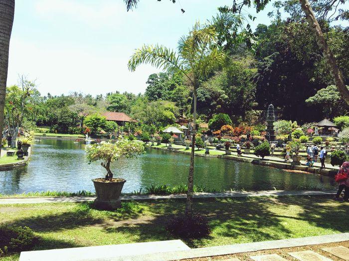 Beautiful place at tirta gangga bali Water Plant Tree Sky Park Day First Eyeem Photo