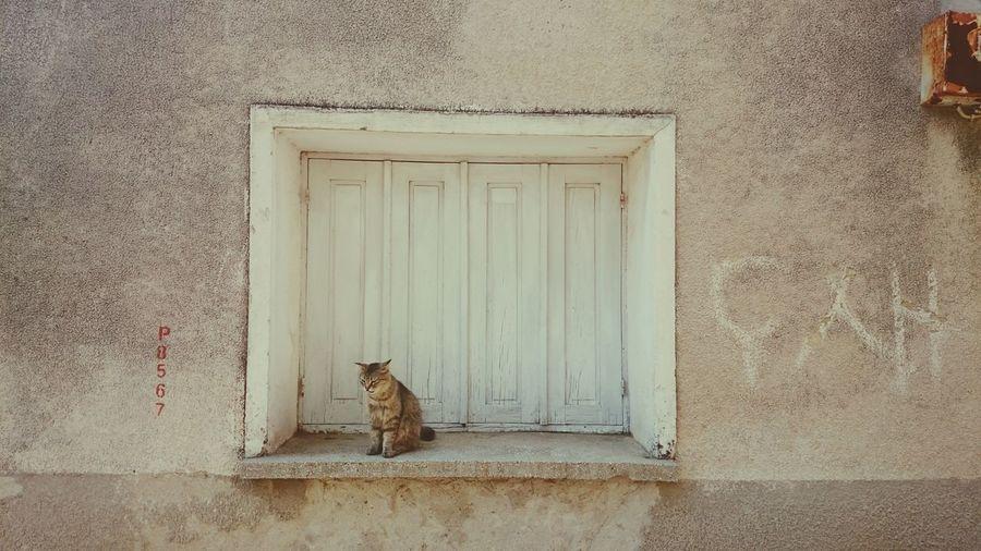 Cat sitting on window sill amidst wall