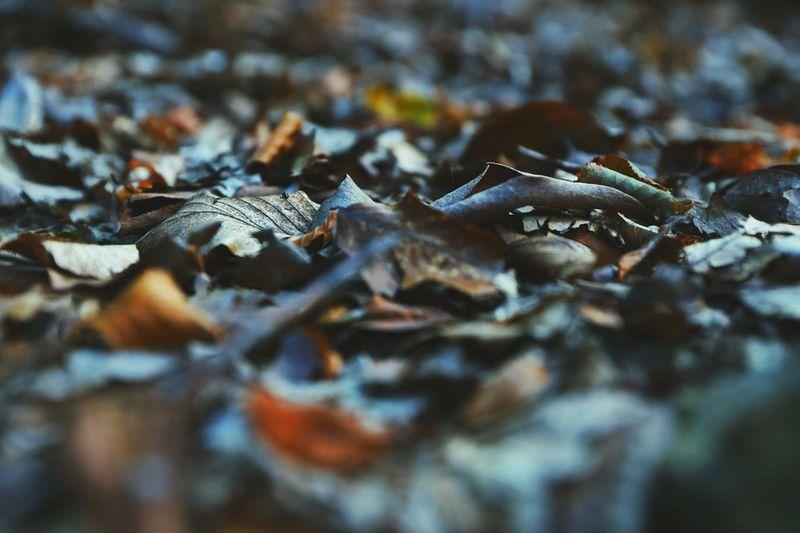 Fall colours.