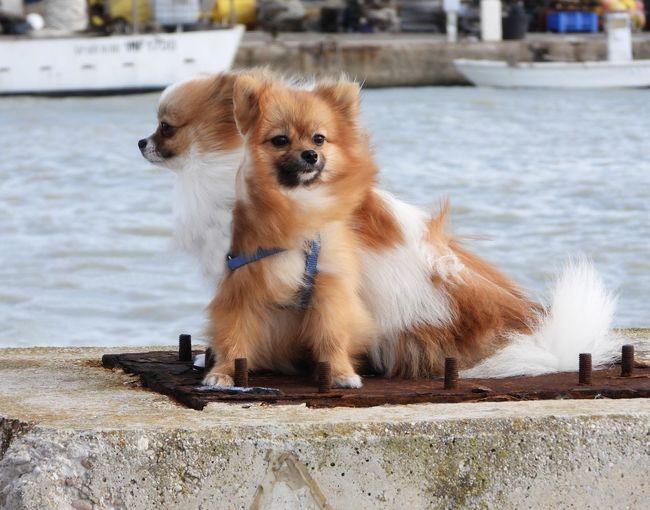 Portrait of dog looking away