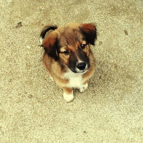 My bobong's pup Check This Out