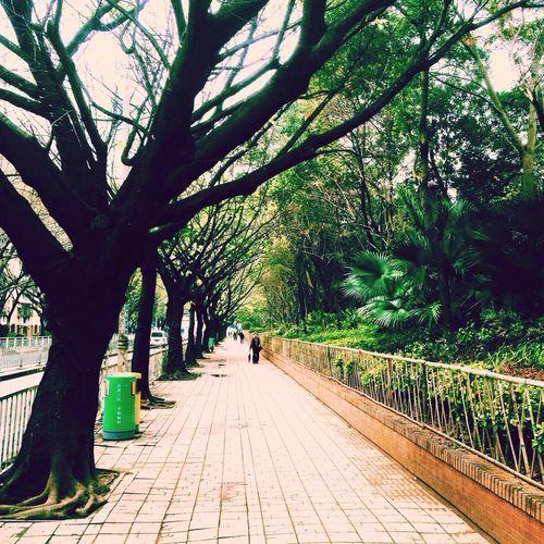 Shenzhen Spring.
