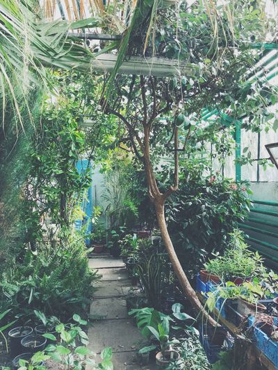 Green Color Plant Part Beauty In Nature Garden Greenhouse Footpath Front Or Back Yard Potted Plant Outdoors Built Structure Tranquility Building Exterior Leaf Tree EyeEmNewHere