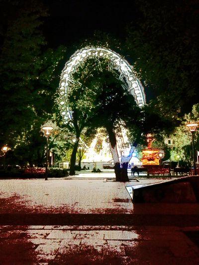 Budapest Eye Tree Night Eye