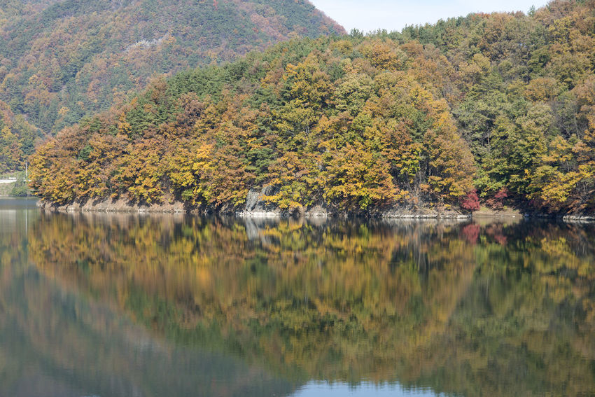 autumn landscape of Busodamak, a beautiful lake located in Okcheon, Chungbuk, South Korea Autumn Autumn Reflections Autumn Leaves Busodamak Okcheon Beauty In Nature Day Forest Grass Growth Lake Lake In Autumn Lake In The Morning Lake Reflection Landscape Morning Lake Mountain Nature No People Outdoors Plant Reflection Scenics Sky Tranquil Scene Tranquility Tree Water Waterfront